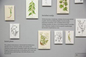 15-NDG-Miesto-gamta-Nacionaline-dailes galerija-2017