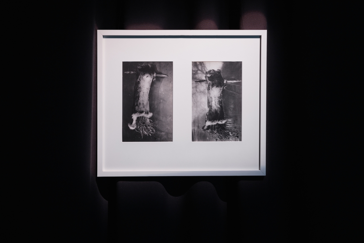 Kūnas ir tamsa_12_Galerija Vartai_A. Budvytis, Oskaras I; Oskaras II, 2002. Sidabro atspaudas