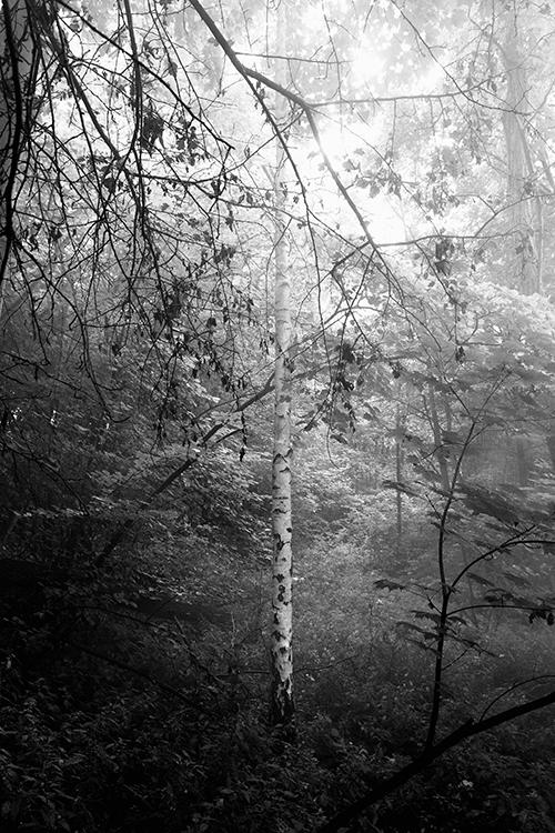3-julius-von-bismarck-forest-apparatus