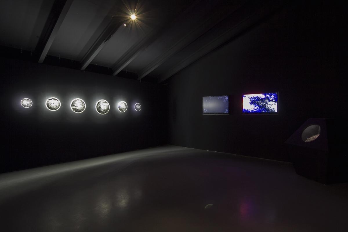 20a-kuai-shen-Miesto-gamta-Nacionaline-dailes galerija-2017